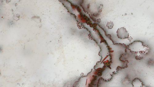 Microbi sconosciuti scoperti sulla Stazione Spaziale Internazionale