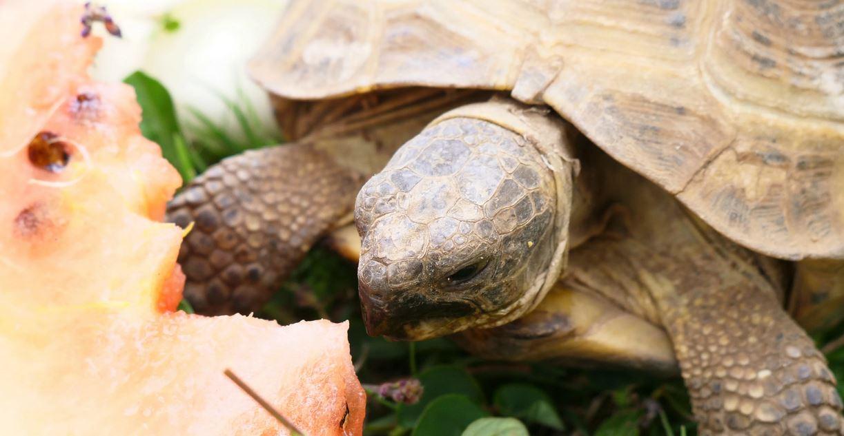 Mangiano carne di tartaruga, 34 ricoverati: morti 10 adulti e 9 bambini