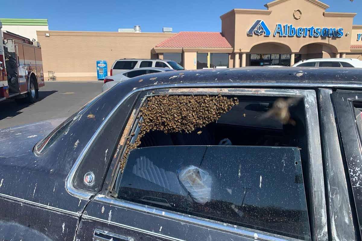 USA: esce dal supermercato e trova l'auto invasa da 15mila api