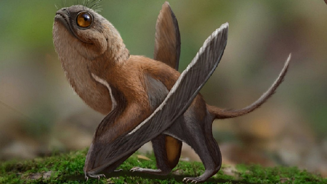 Cina: scoperto piccolo pterosauro volante