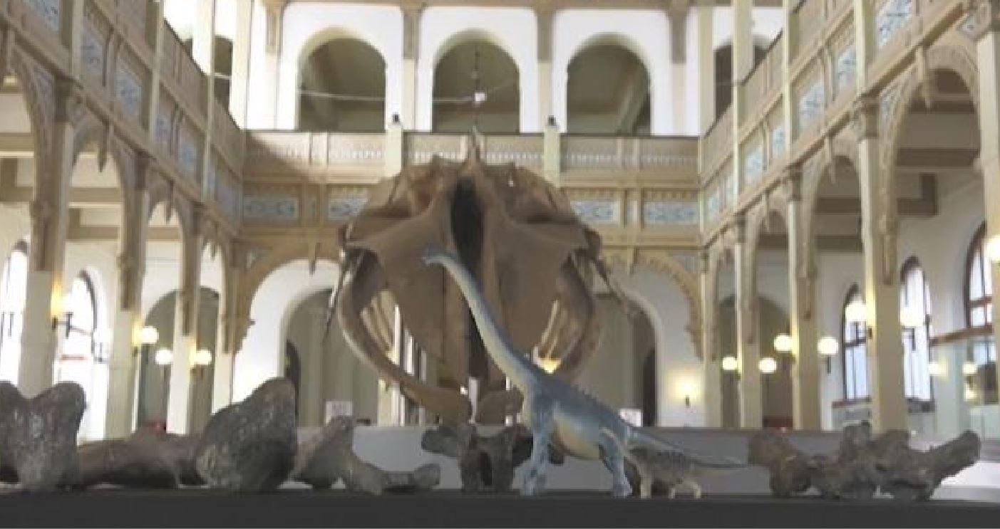 Scoperti resti di una nuova sconosciuta specie di titanosauro nel deserto di Atacama