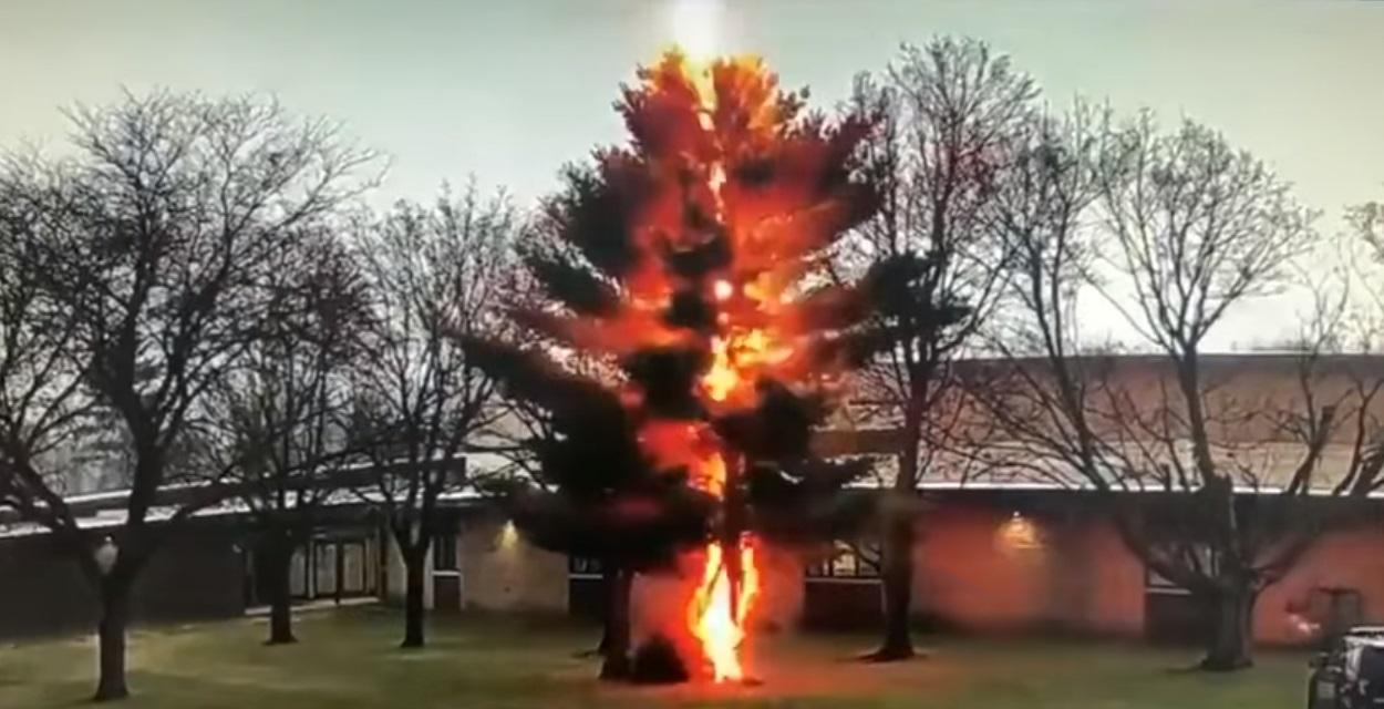 USA: un fulmine si abbatte su un albero disintegrandolo. Il video