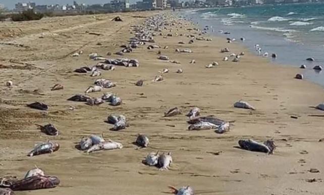 Iran: migliaia di pesci morti sulla spiaggia. 'Colpa della pesca elettrica dei cinesi'