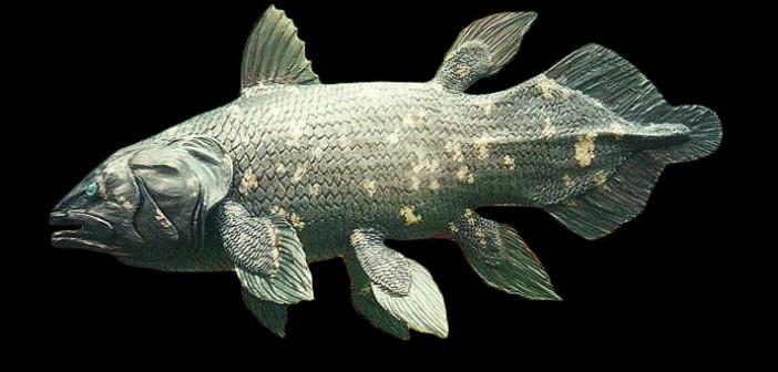 Un antico pesce celacanto di oltre 5 metri scoperto in Marocco