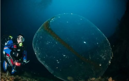 Natura: identificata la natura della sfera gelatinosa avvistata a Punta Campanella