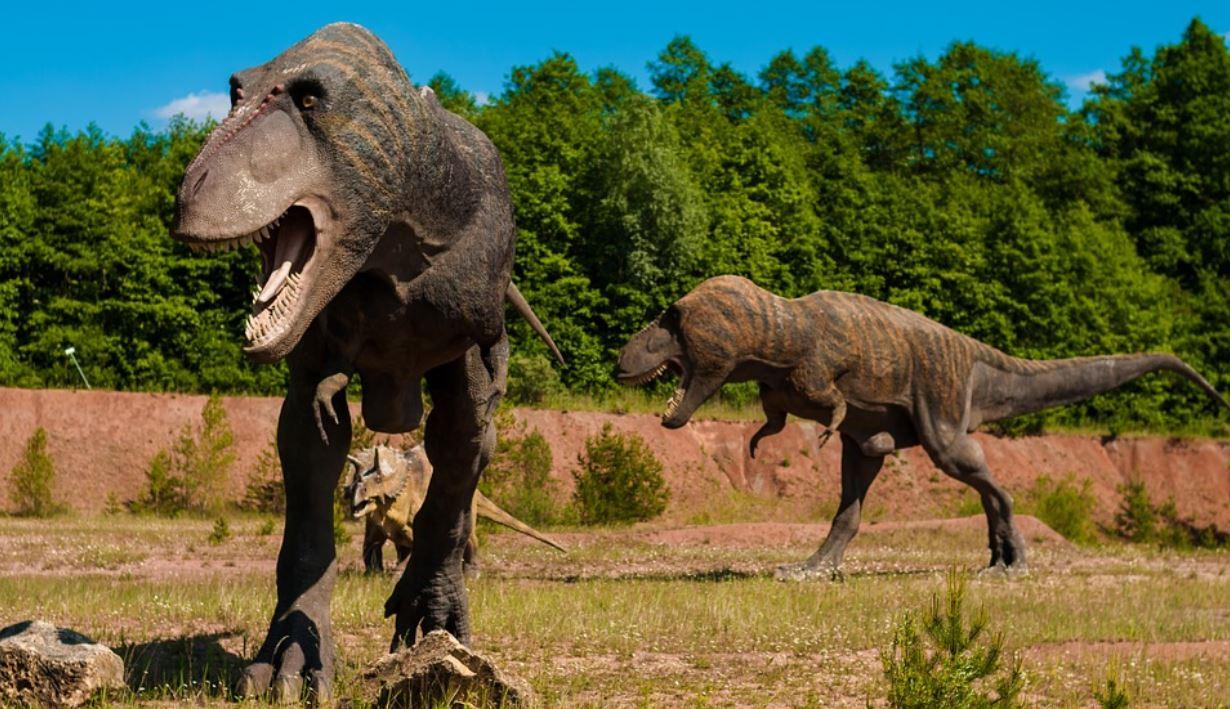 Scoperto quanti T-rex hanno vissuto sulla Terra: il numero totale è enorme
