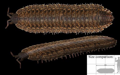 Iglesias: scoperto fossile preistorico di un millepiedi gigante