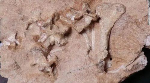 Un fossile di 250 milioni di anni fa scoperto in Antartide. Gli esperti: 'È il re antartico'