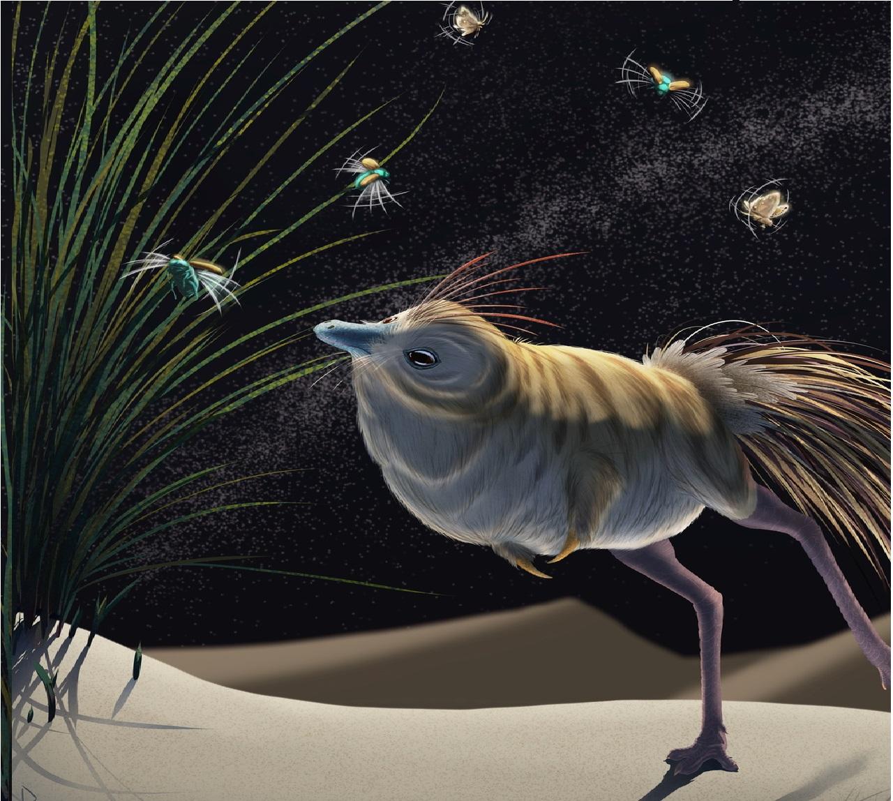 Uno 'strano' dinosauro è uno dei primi predatori notturni mai scoperti