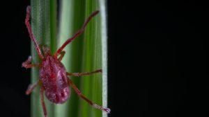 USA: viene morso da zecca e contrae tre diverse malattie