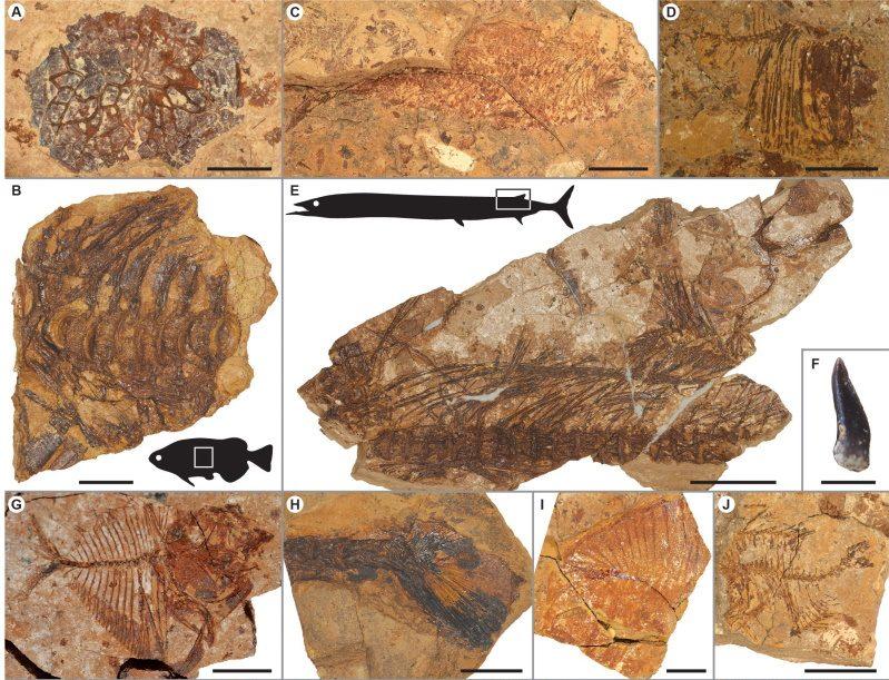 Egitto: fossili dimostrano come i pesci siano sopravvissuti a un riscaldamento globale 56 milioni di anni fa