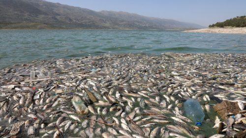 Libano: oltre 40 tonnellate di pesci morti lungo le coste del lago Qaraoun