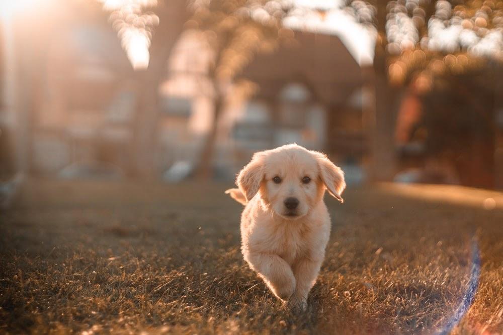 La scienza lo conferma: avere un cane al nostro fianco migliora la nostra vita