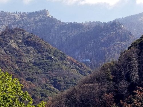 California: al Sequoia National Park una sequoia è in fiamme da più di nove mesi