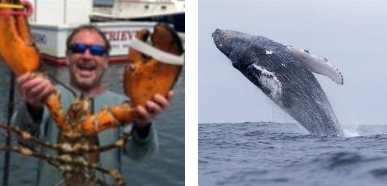 Usa: pescatore inghiottito e sputato da una balena