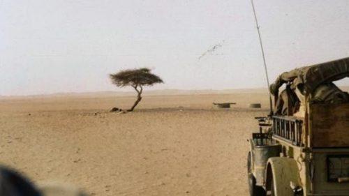 Gli alberi geneticamente modificati renderanno 'verde' il Sahara. Il progetto