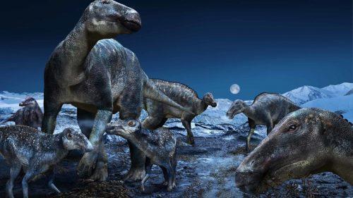 """Resti di dinosauri a pochi chilometri dal Polo Nord. I paleontologi: """"Scoperta incredibile"""""""