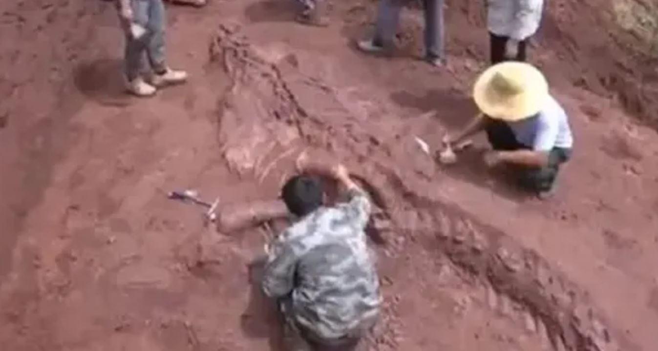 Scoperto scheletro di un dinosauro gigante lungo 8 metri: intatto al 70%