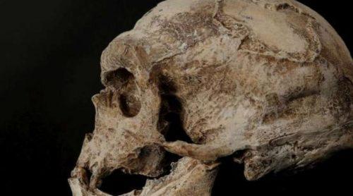 """Scoperta una nuova specie di """"Homo"""". Storia dell'evoluzione umana da riscrivere?"""