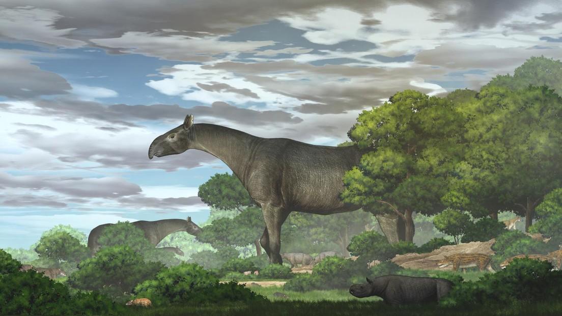 Cina: i resti di un gigantesco rinoceronte scoperti nella provincia di Gansu