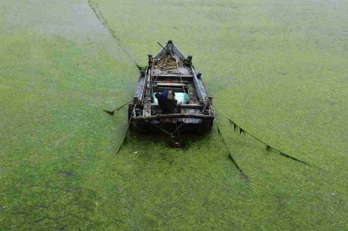 Cina: le alghe invadono area di 551 chilometri quadrati di mare