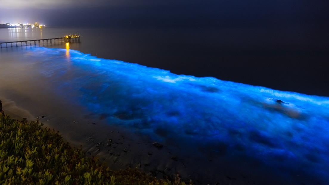 Bioluminescenza negli oceani: il fenomeno studiato dai satelliti resta un mistero
