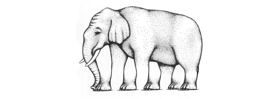 Quante zampe ha l'elefante? L'illusione di uno psicologo americano che fa discutere