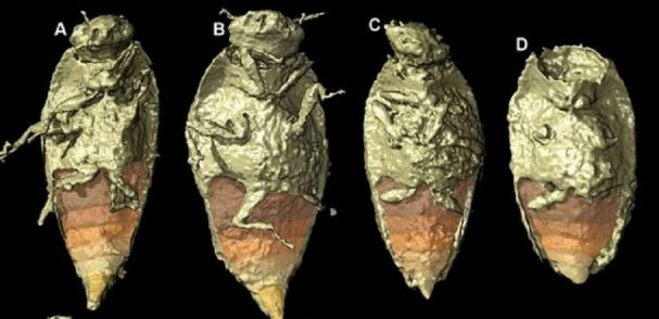 Svezia: scoperta nuova specie di insetto nelle feci fossilizzate di un dinosauro