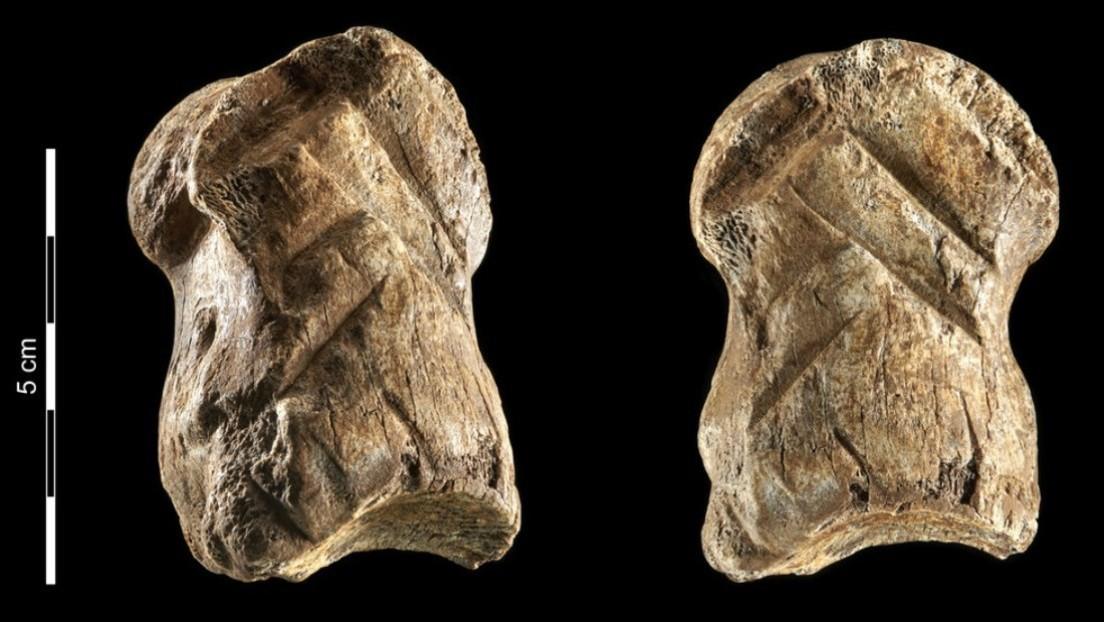 Un osso scolpito da un Neanderthal 51mila anni fa è la rappresentazione artistica più antica