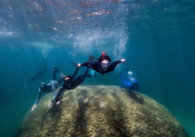 Australia: scoperto corallo di oltre 10 metri. Ha oltre 400 anni