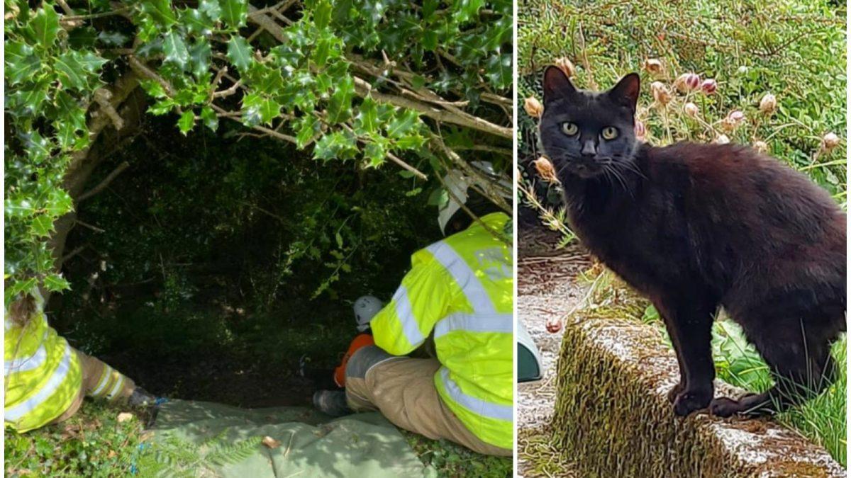 Inghilterra: gatto salva l'anziana padrona caduta in un burrone aiutando i soccorritori a localizzarla