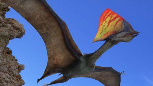 Brasile: fossili di un rarissimo pterosauro scoperti durante un sequestro della Polizia