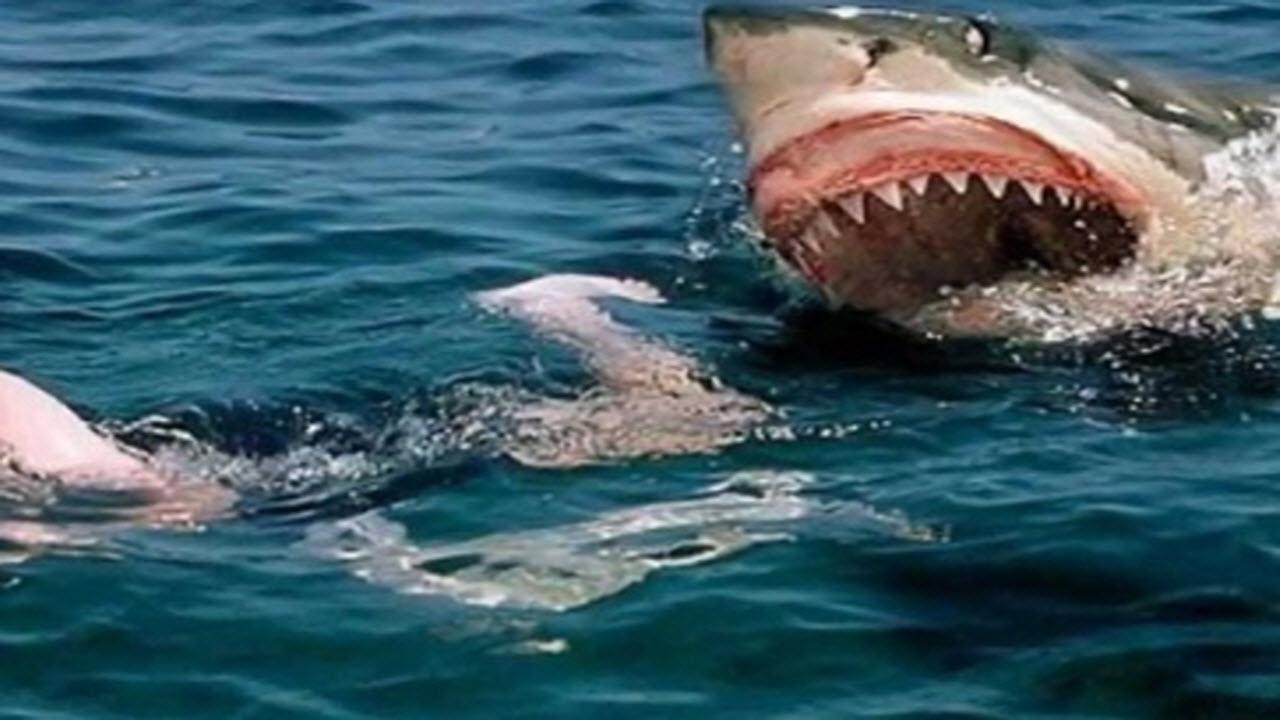 Australia: surfista inseguito da uno squalo.VIDEO