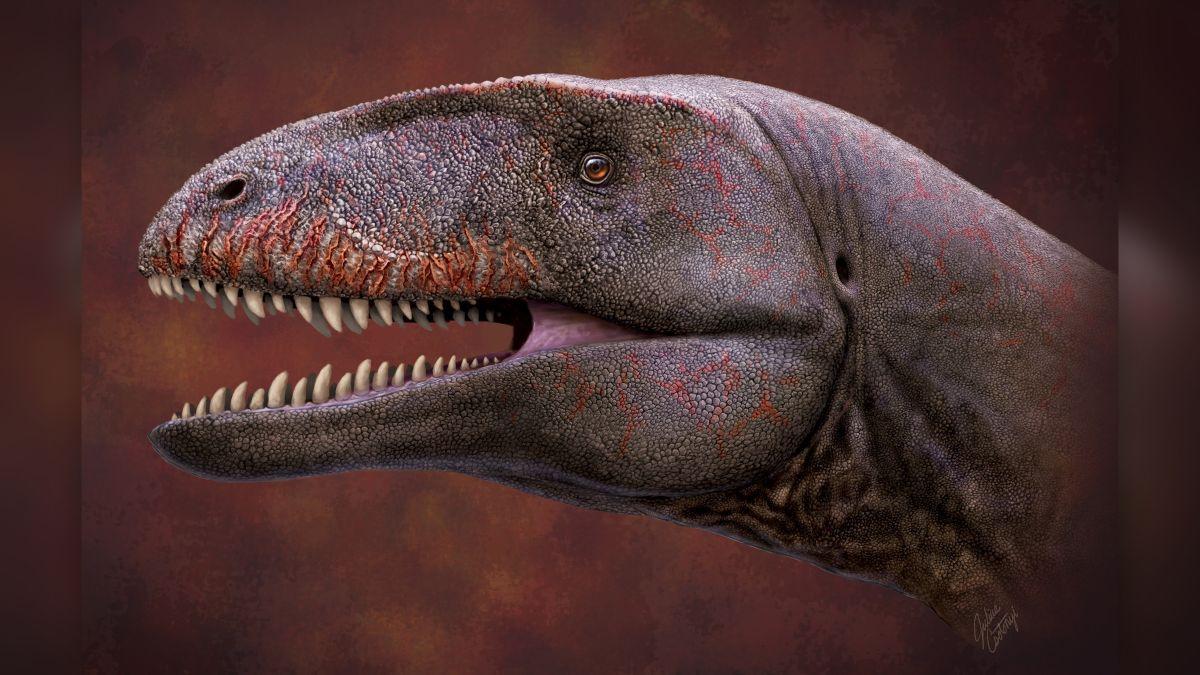 Uzbekistan: scoperti i resti fossili del gigantesco dinosauro dai 'denti di squalo'