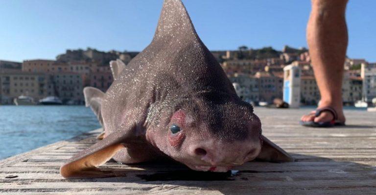 Eccezionale scoperta all'Isola d'Elba: identificato raro esemplare di pesce