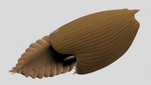 Scoperto enorme fossile marino vissuto più di 500 milioni di anni fa. 'È uno dei più grandi animali del Cambriano '