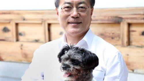 Corea del Sud: il presidente propone il divieto di mangiare carne di cane