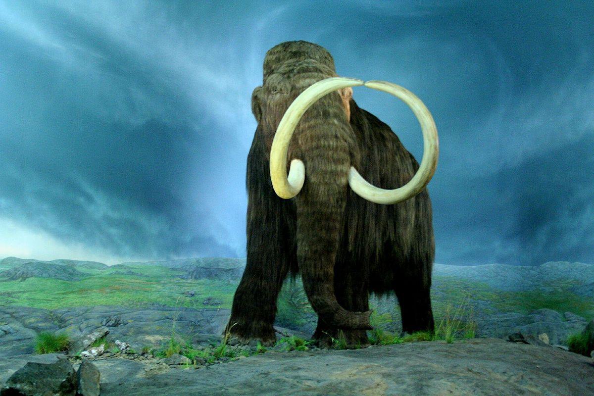 I mammut ritorneranno in vita grazie ad una startup americana