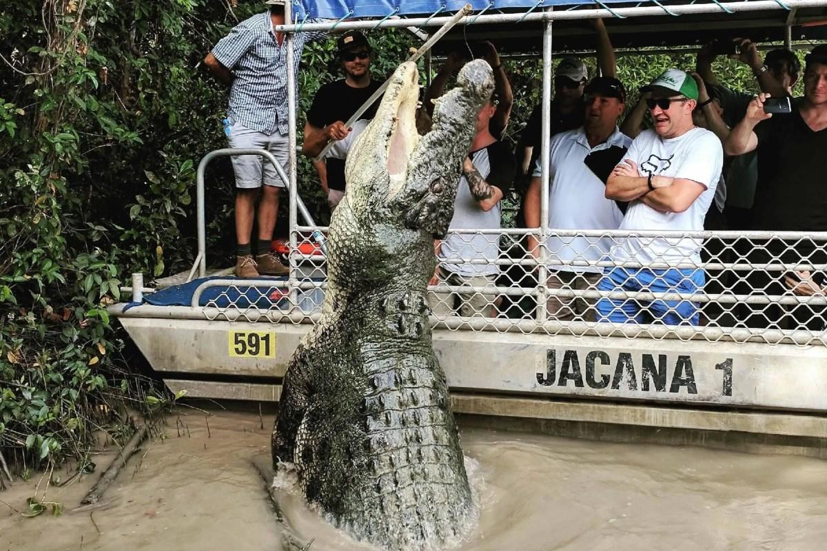 "Australia: ""tour dei coccodrilli saltanti"" finisce in tragedia"