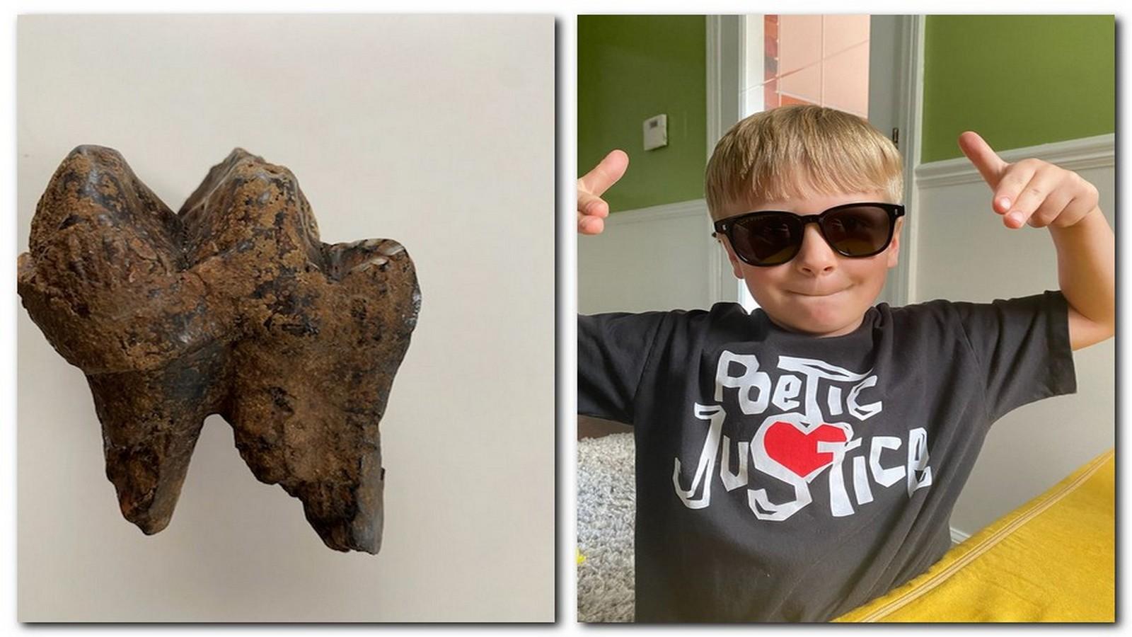Usa: bambino trova un raro dente di mastodonte