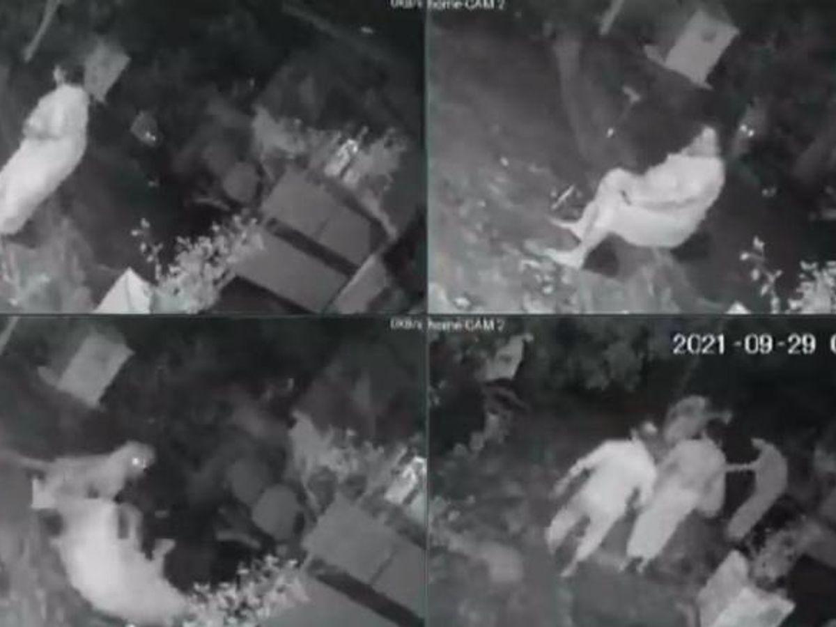 Drammatica aggressione in India: leopardo attacca una donna. Il video