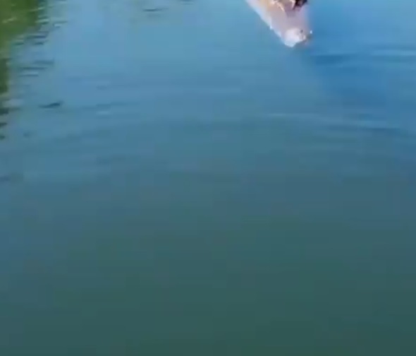 Coccodrillo salta fuori dall'acqua e distrugge un drone. Il video