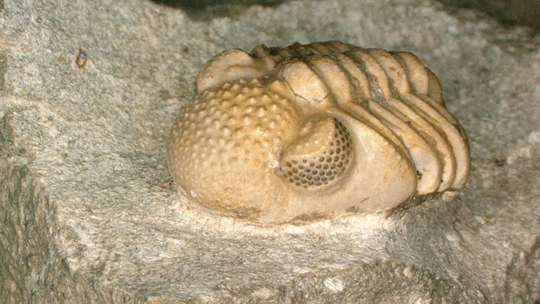 Scoperto trilobite preistorico con un 'iperocchio'