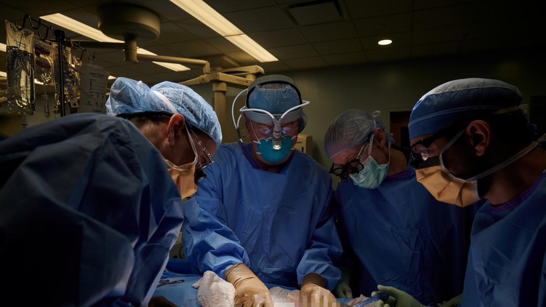 Riuscito il primo trapianto di rene di maiale in un essere umano